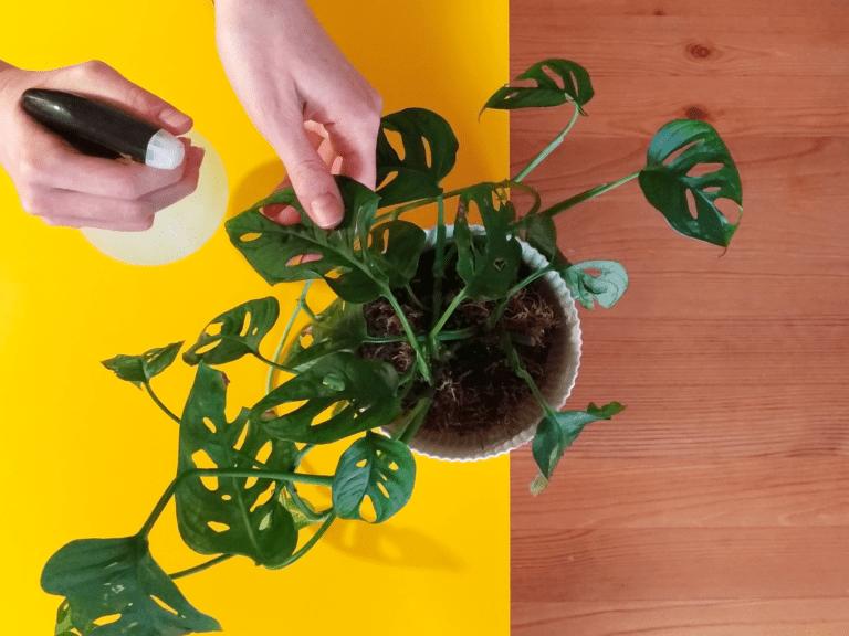 Heroplant - Pulire le foglie