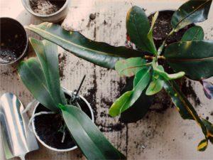 Heroplants_cur_delle_piante_in_casa_a_maggio