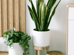 Heroplants_piante semplici