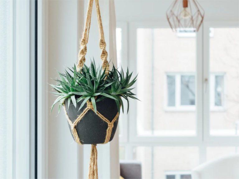 accessori per arredare casa con le piante