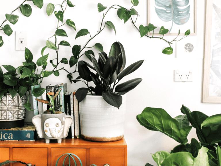 piante che mantengono fresca la casa