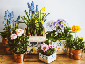 Benessere Colori | Heroplants