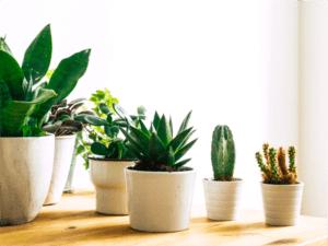 piante succulente da tenere in casa