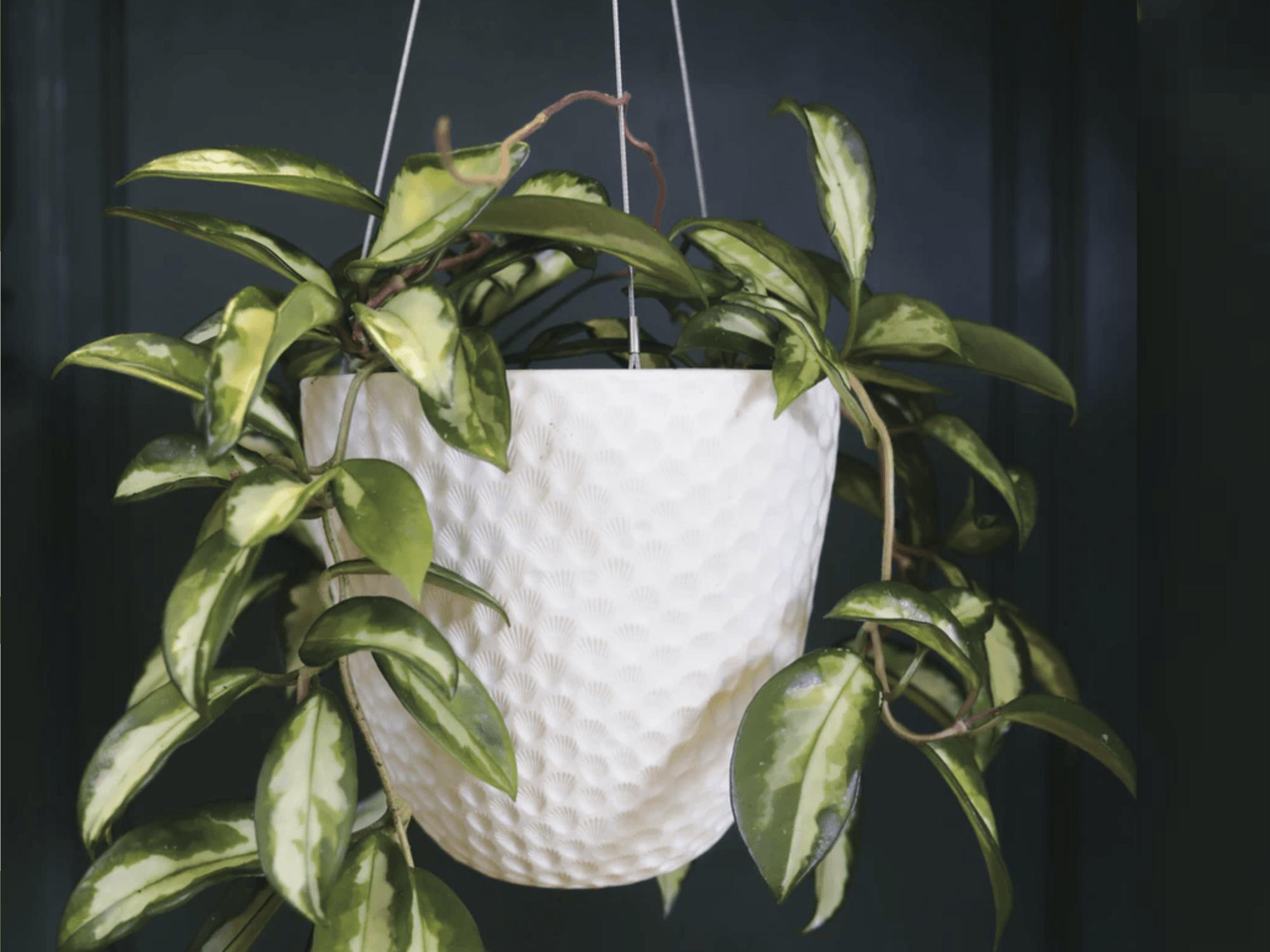 piante appese in poco spazio