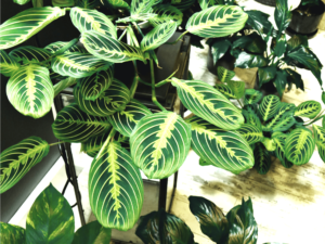 Piante tropicali per la casa