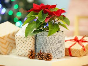 regali di natale per chi ama le piante