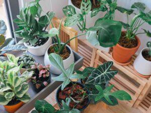 piante da interno benessere durante il lockdown
